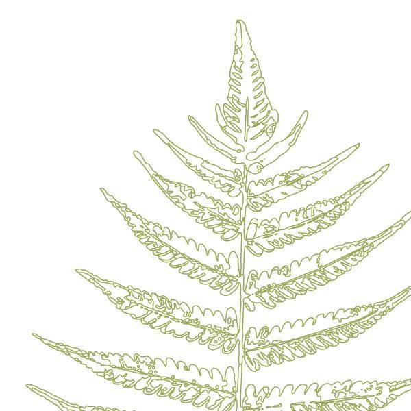 Euphoria House Botanical Custom Birth Print Baby Fern