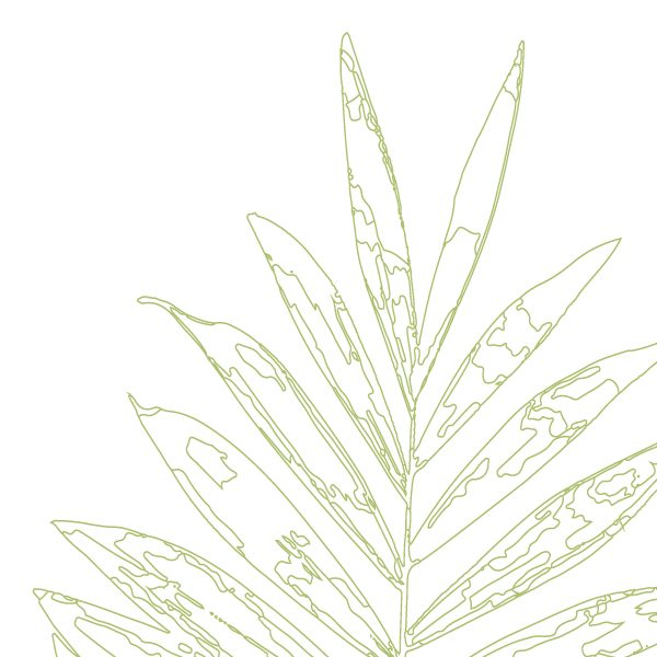 Euphoria House Botanical Custom Birth Print Baby Palm