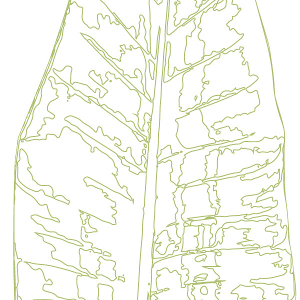 Euphoria-House-Botanical-Custom-Birth-Print-Baby-Banana-Leaf-closeup