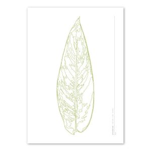Euphoria-House-Botanical-Custom-Birth-Print-Baby-Heliconia-Leaf-main