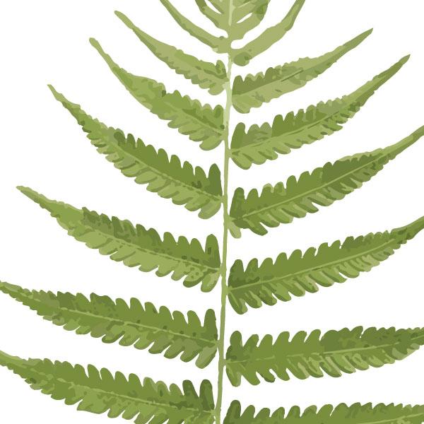 euphoria-house-fern-frond-birth-print-full-leaf-closeup