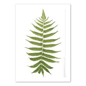 euphoria-house-fern-frond-birth-print-full-leaf-main
