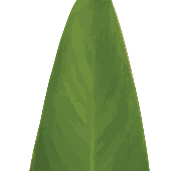 euphoria-house-heliconia-leaf-birth-print-full-leaf-closeup