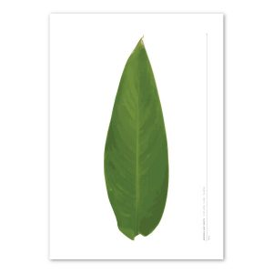 euphoria-house-heliconia-leaf-birth-print-full-leaf-main