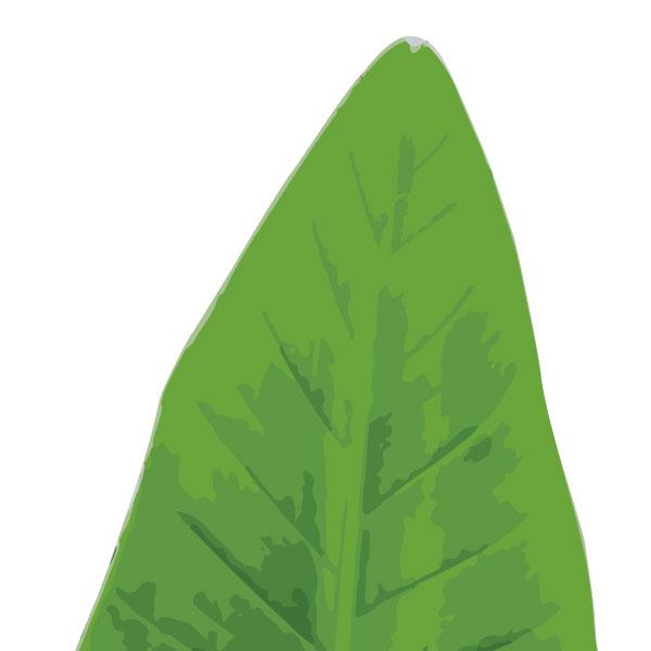 banana-leaf-birth-print-closeup