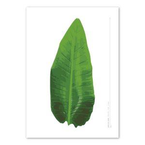 banana-leaf-birth-print