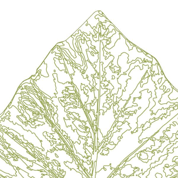 scandi-elephant-ear-leaf-art-print-a4-a3-closeup