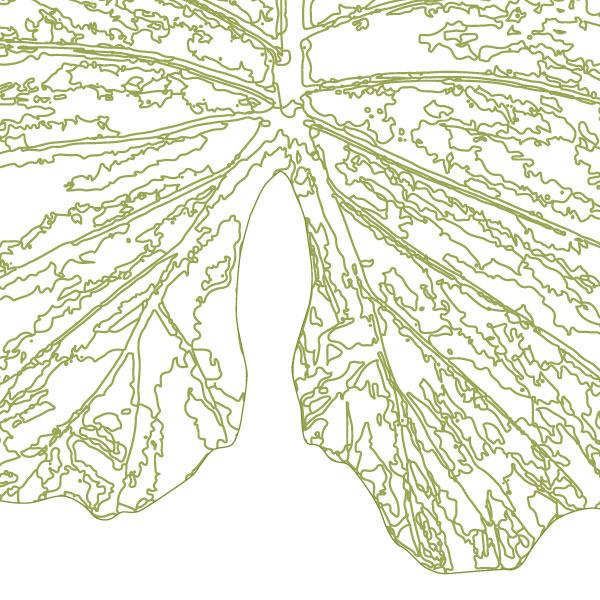 scandi-elephant-ear-leaf-art-print-a4-a3-closeup2