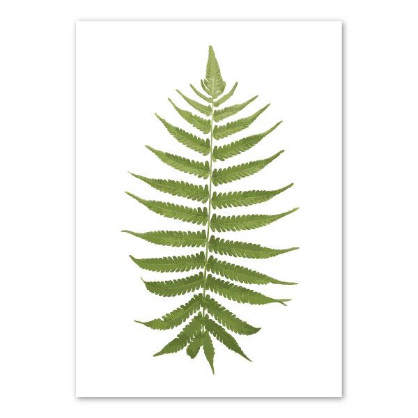 fern-frond-art-print-a4-a3
