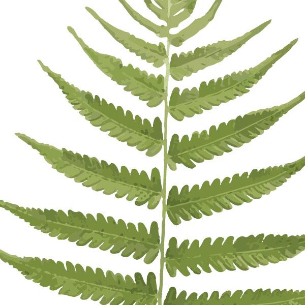 fern-frond-art-print-a4-a3-closeup