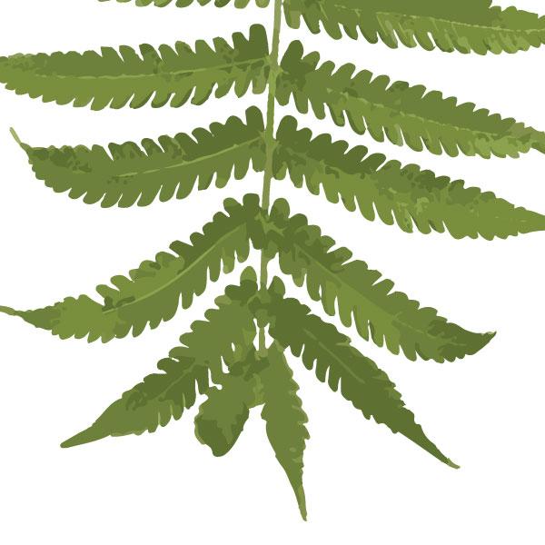 fern-frond-art-print-a4-a3-closeup2