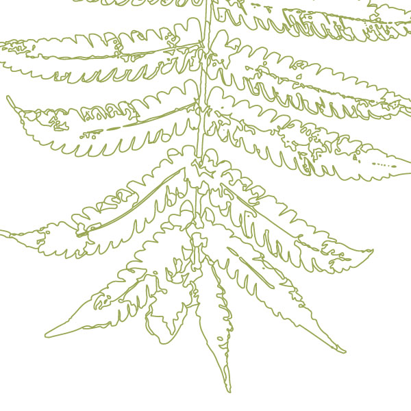 scandi-fern-frond-art-print-a4-a3-closeup2