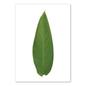 heliconia-leaf-art-print-a4-a3