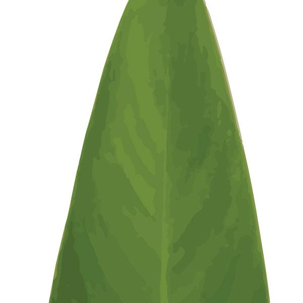 heliconia-leaf-art-print-a4-a3-closeup