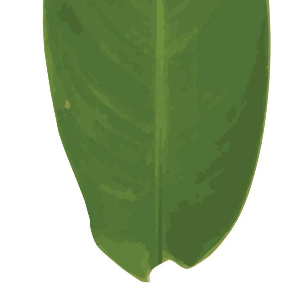heliconia-leaf-art-print-a4-a3-closeup2