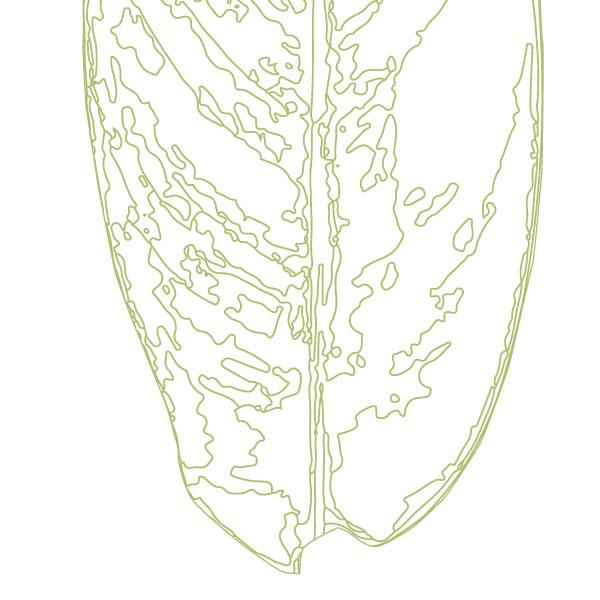 scandi-heliconia-leaf-art-print-a4-a3-closeup2